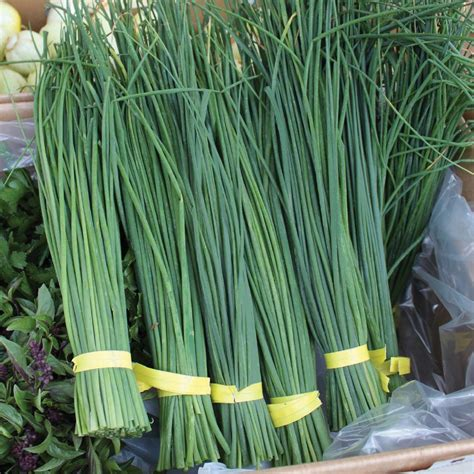 seeds  change organic nelly chives seed   home