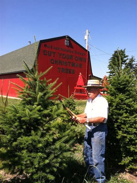 100 christmas tree farm columbus ohio 360 best