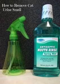 cat urine odor removal home remedy 25 best ideas about cat urine on pet spot