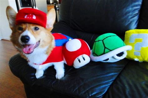 haircut games dogs dogs in video game costumes bravado gaming