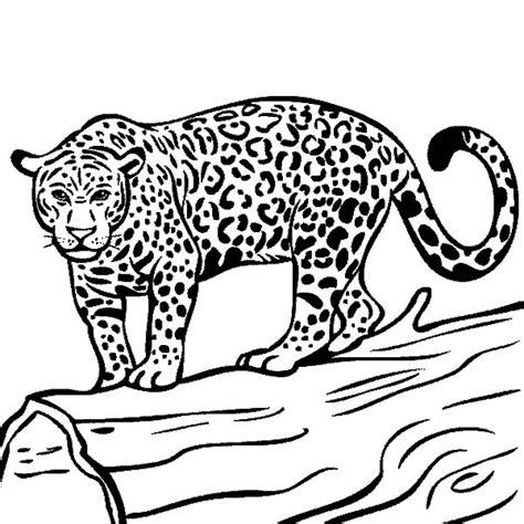 coloring pages jaguar animal rainforest animal jaguar coloring pages bulk color