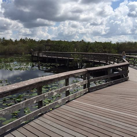 airboat tour near me everglades airboat tours near homestead fl 28 images
