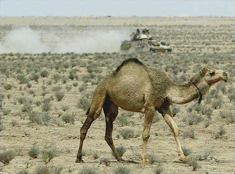 camel defence forum military  defencetalk