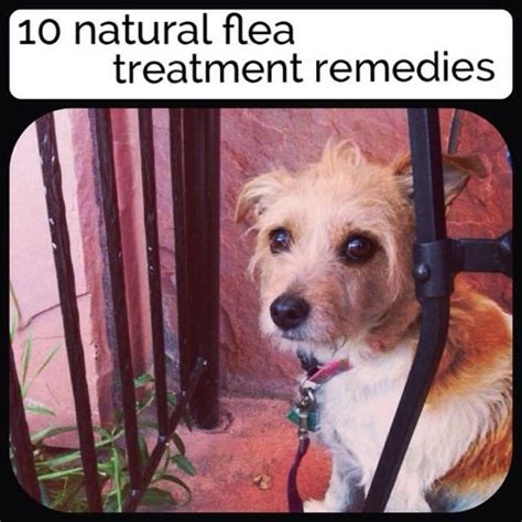 10 flea treatments