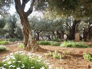 jerusalem garden of gethsemane