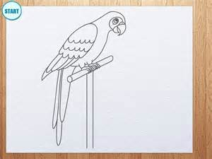 draw parrot