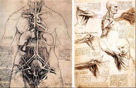 Sketches Leonardo Da Vinci by 301 Moved Permanently