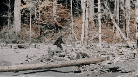 Bigfoot Email Search The 10 Most Convincing Bigfoot Sightings Outside