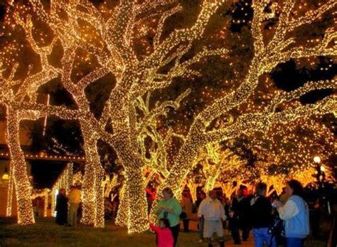 pretty christmas light displays christmas pinterest
