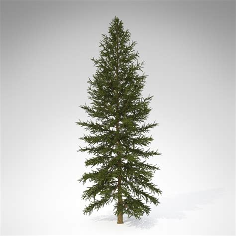 xfrogplants douglas fir 3d model max 3ds c4d lwo lw