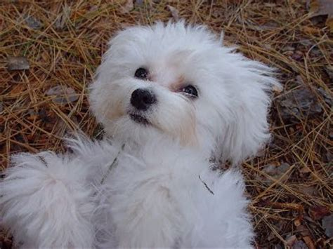 small breed puppies for adoption hd animals small dogs for adoption breeds picture
