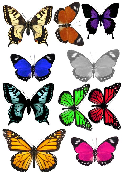printable images of butterflies butterfly match no time for flash cards