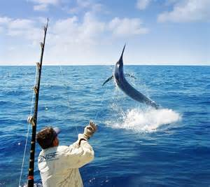 Fishing In Day And Overnight Gameboat Charters Ex Port Douglas