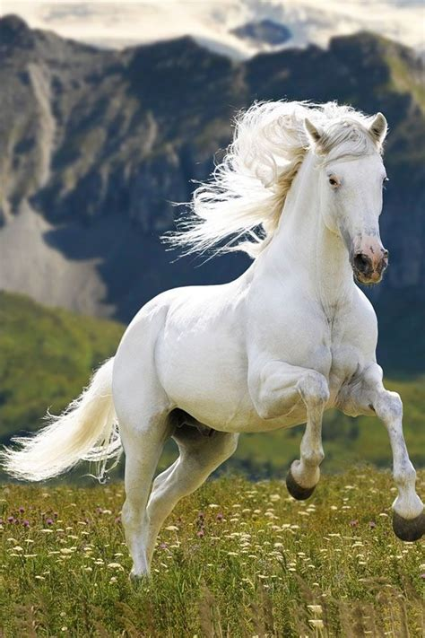 white mustang horse white mustang horse www imgkid com the image kid has it