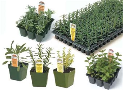 where to buy herb plants richters herbs herb and vegetable plants
