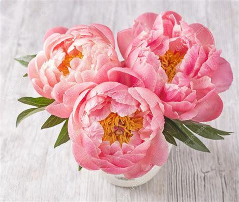 fiore di peonia fiori di peonia foto stock 169 egal 79876052