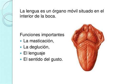 la lengua de los 8430618813 lengua