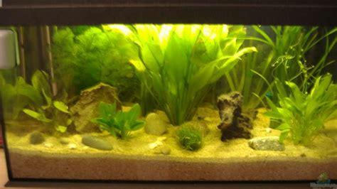 Lu Aquarium Aquascape aquarium andreas lustenberger becken 2654