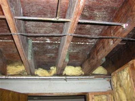 green mold in basement how to kill white mold on wood white mold in basement