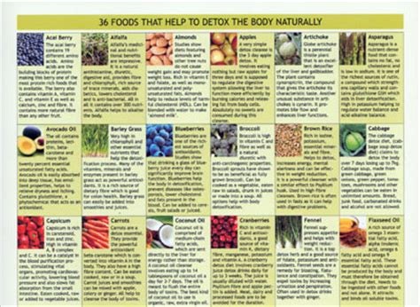Detox Guide Book by Detox Guide Stefan Mager New Laminated Chart Books In