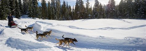 sledding canada whistler bc canada sledding tourism whistler