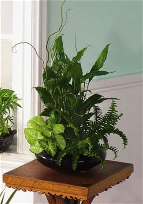 indoor plants arrangement ideas house plant tropical ask for color 8 quot ceramic pot nice