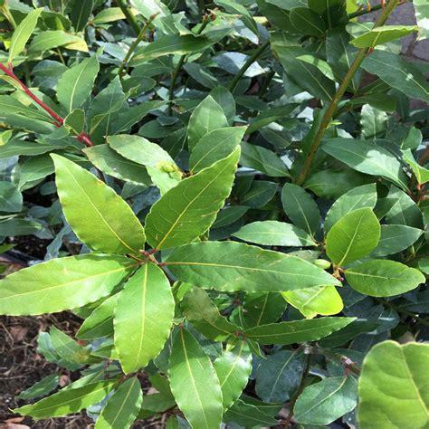 fruit trees plants edible garden  home depot