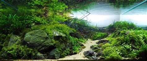 The Best Aquascape by Top Aquascape Wallpapers Weneedfun