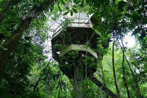 real life treehouse this couple built a real life ewok village in costa rica