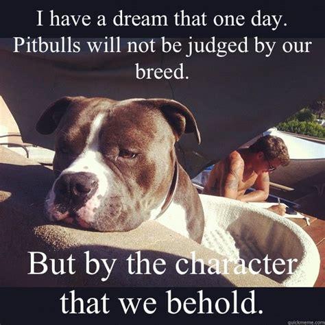 Pitbull Memes - 120 best pit bull memes images on pinterest pit bull