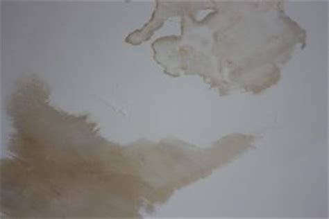 How To Seal Water Stains On Ceiling by Diy Repair Drywall Water Damage Do It Yourself Help
