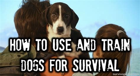 how to train your dog to use the bathroom outside how to use and train dogs for survival the survival