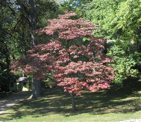 good trees for small backyards recommended trees