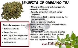 health benefits of oregano tea realfarmacy com