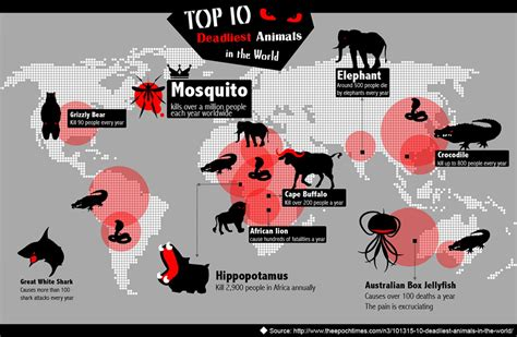 Top 10 Most Dangerous Animals by Top 10 Deadliest Animals In The World Visual Ly