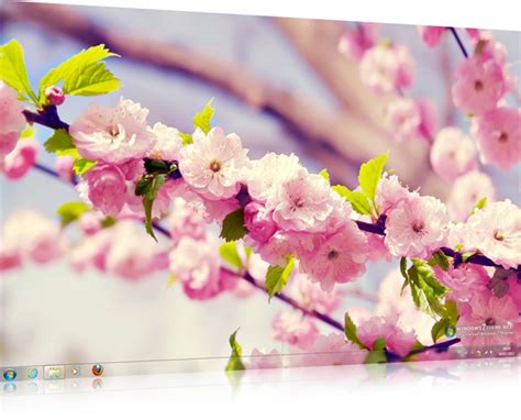 themes for windows 7 flower spring flowers windows 7 theme download