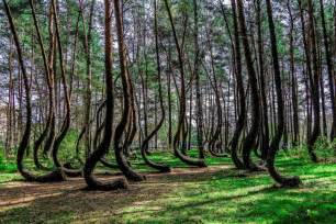 crooked forest in western poland mysterious facts