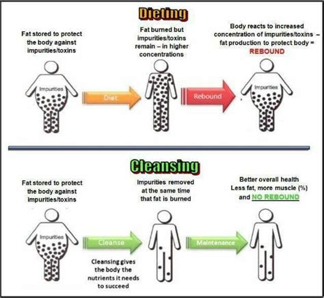 What To Expect During Liver Detox by 281 Best Images About Weight Management On