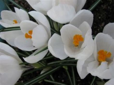 jardiner en mars que planter semer et au jardin