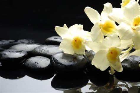imagenes flores zen foto mural piedras negras flores amarillas zen