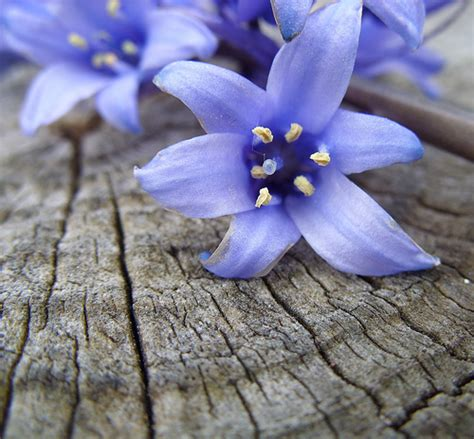 Wedding Bell Blues Meaning by Bluebell Flower Meaning Flower Inspiration