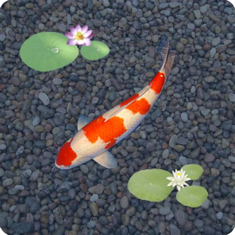 anipet koi live wallpaper full version download amazon com anipet koi live wallpaper free appstore for