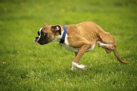 legged dogs 2 legged charms millions the columbian