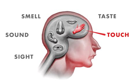 scientifically elucidate the cause of the unique smell keep your brain alive
