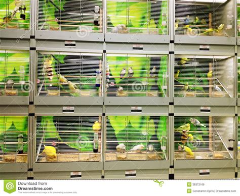 Beautiful Reptile Cages #5: Bird-cages-pet-shop-38372169.jpg