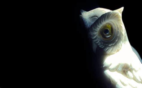 hd owl statue wallpaper