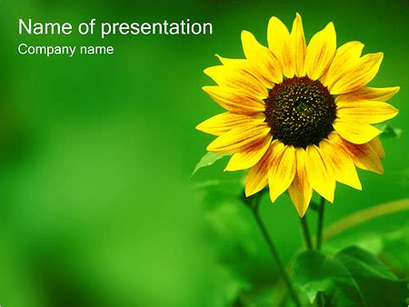 Sunflower Powerpoint Template Backgrounds Id 0000000362 Smiletemplates Com Sunflower Powerpoint Template