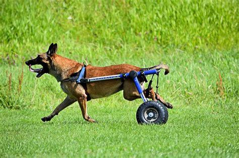 silla ruedas para perros c 243 mo fabricar una silla de ruedas para perros www doogweb es
