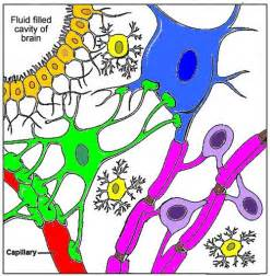 nerve cells coloring key