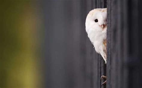 Peek A Boo peek a boo